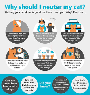 Neutering Cats Protection infographic fo