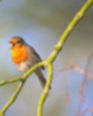 small-bird-2224946_1920.jpg