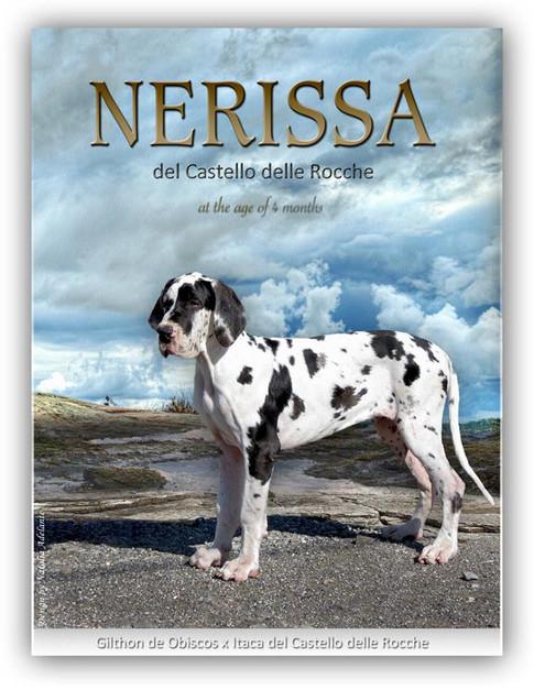 Nerissa DCDR