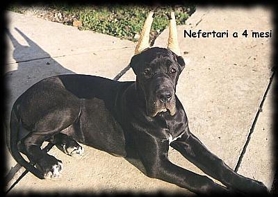Nefertari DCDR