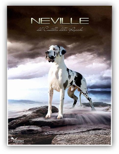 Neville DCDR