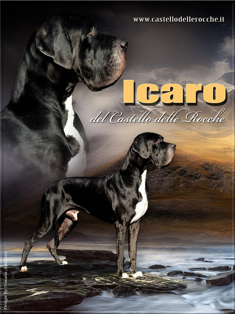 Icaro DCDR