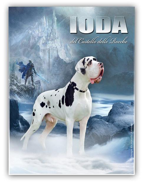Ioda DCDR