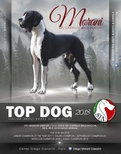 Top Dog Morani