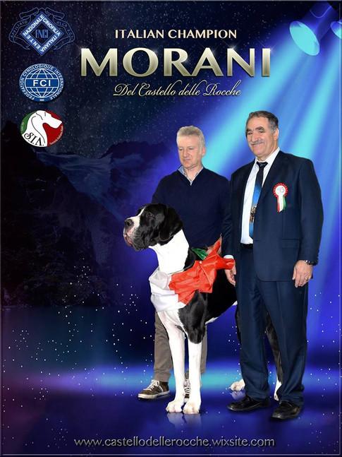 Morani DCDR