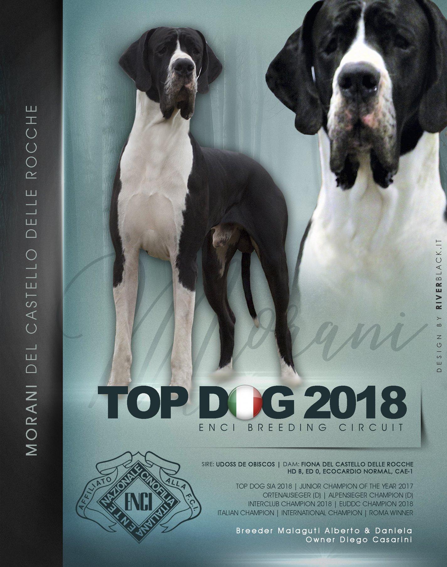Morani DCDR Top Dog 2018