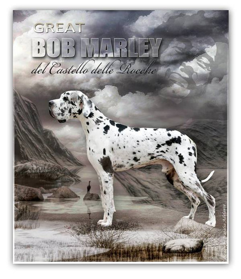 Great Bob Marley DCDR