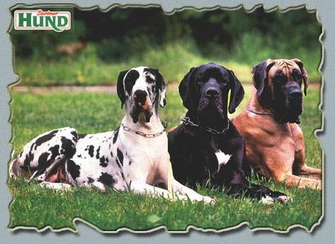 """Rivista tedesca """"Partner Hund"""" - settembre 1997 Gretel e Minosse Del Castello Delle Rocche assieme all'amica fulva Alania (allev. Boscolo/Baseggio)"""
