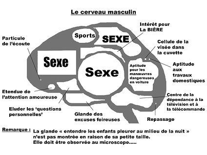 Le cerveau masculin.jpeg
