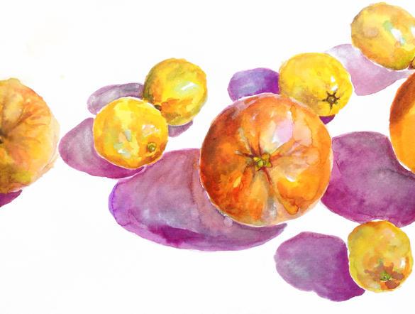 orange and lemon study