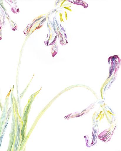 tulip life