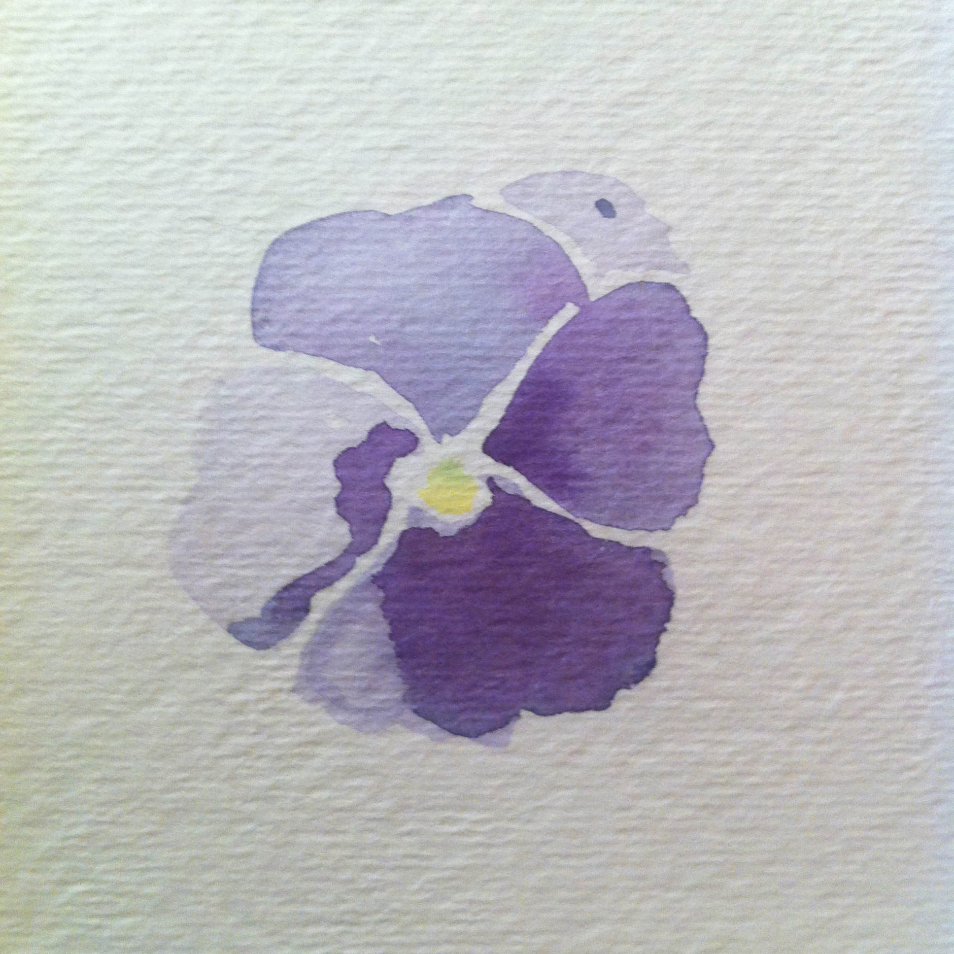 purple pansy study