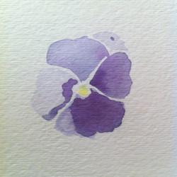 purple pansy study