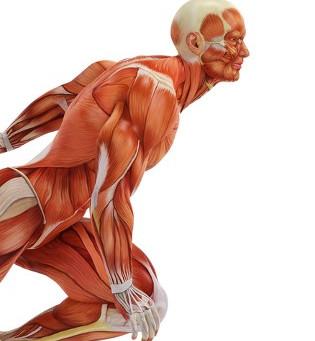 Artículo Salud: Cambios en huesos, músculos y articulaciones por el envejecimiento.