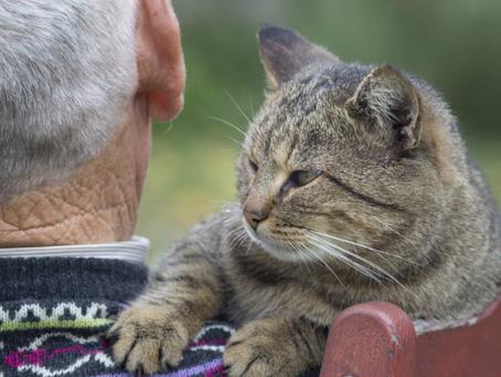 Artículo: Los beneficios de los gatos en personas mayores.