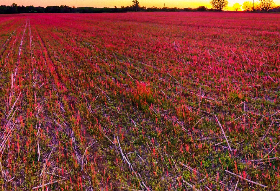 Madison's Harvest