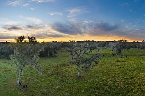 Pedros Pasture