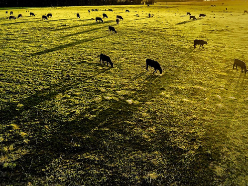 Card - Dali Cows