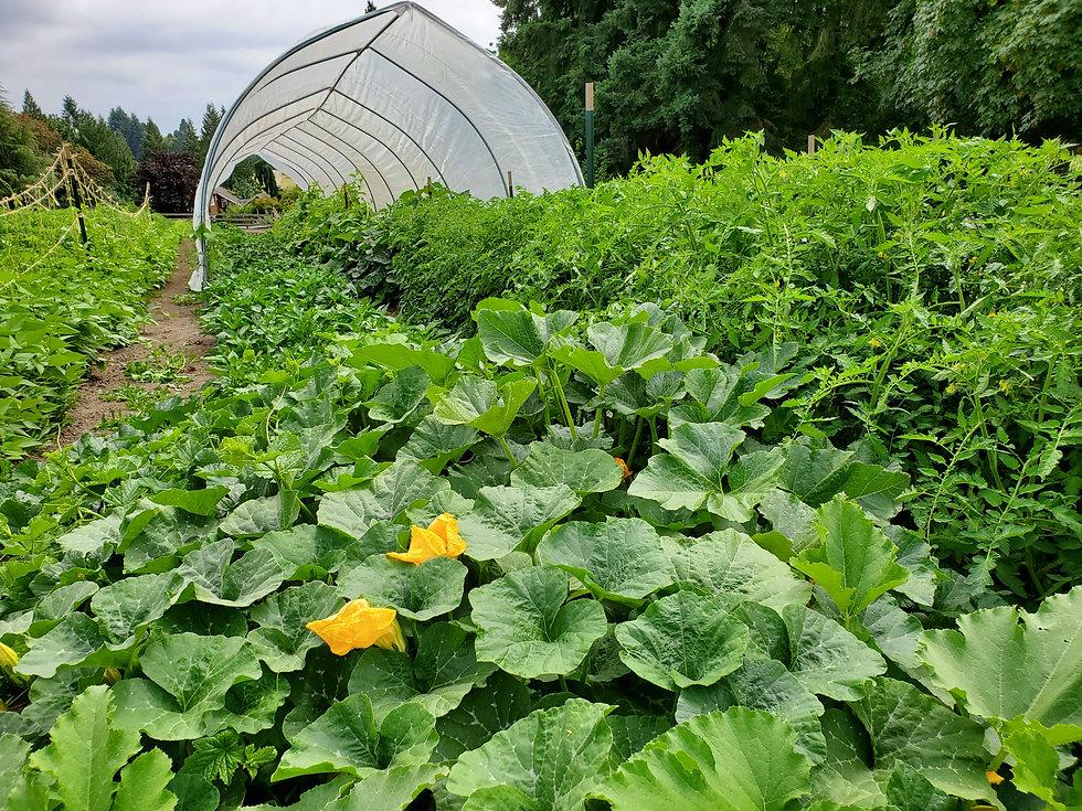 Portland Seedhouse Farm