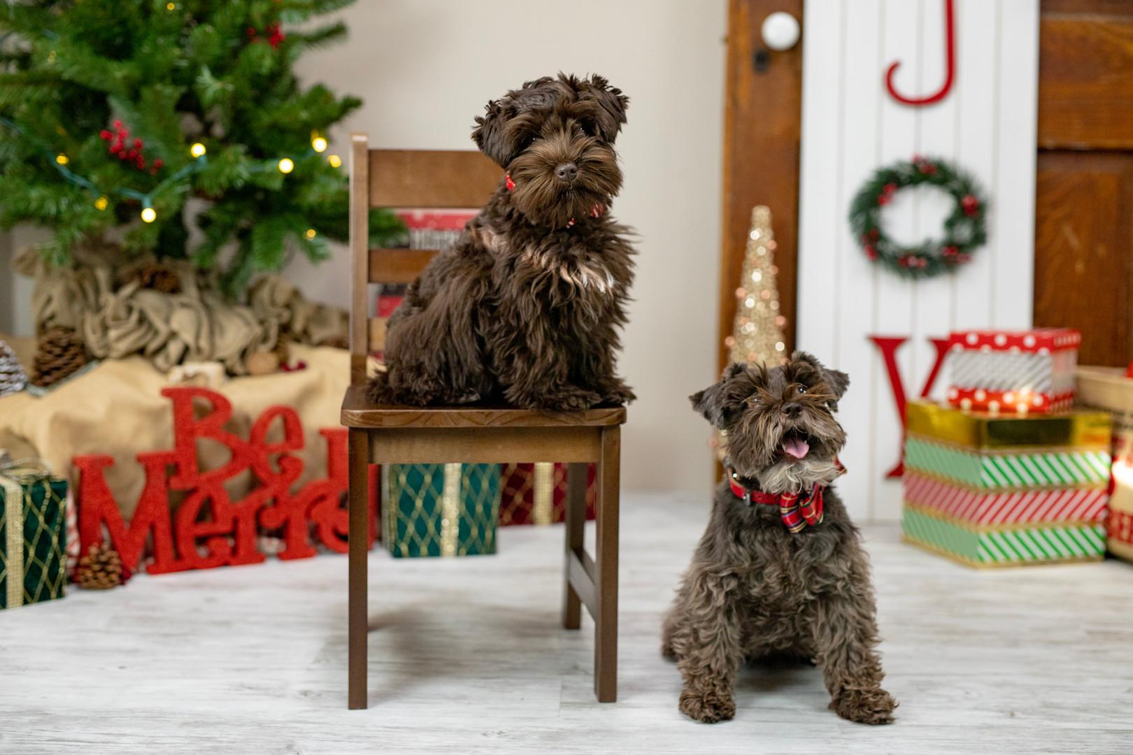KatFour Photo Christmas & Fall Mini