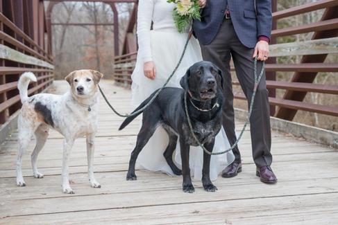 Wedding Pet Photography Columbia MO