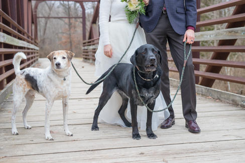 Wedding Pet Photography Columbia MO