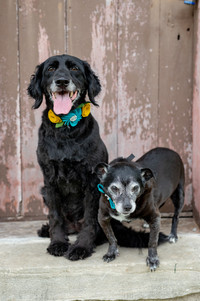 Pet Photography in Columbia MO
