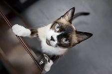 About me. Pet. Solopreneur Blog. Micro Business Blog.