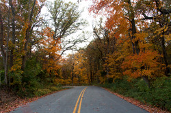 Fall Road | Fine Art Photography