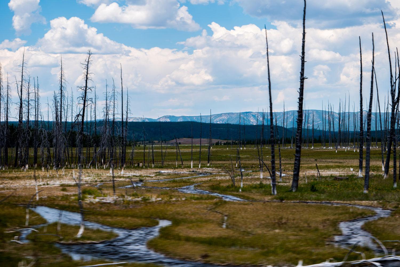 Yellowstone-Burnt-Trees