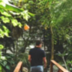 Drew Jungle
