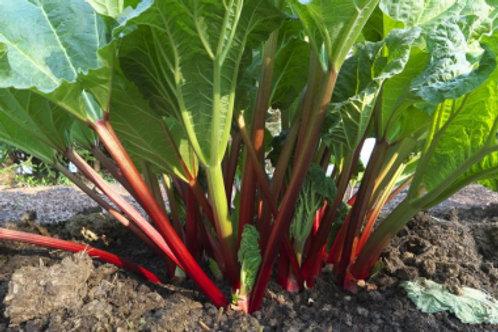 Valentine Rhubarb