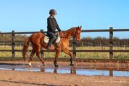 Equine 2.jpg