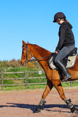 Equine 3.jpg