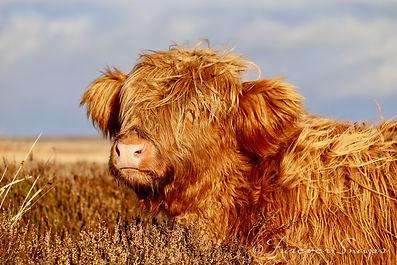 livestock_1.jpg
