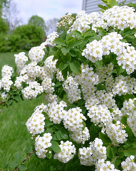 flower bush.jpg