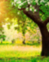 tree plantinh.jpg