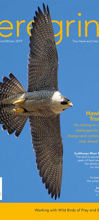 Hawk and Owl Trust