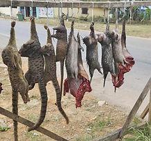 poaching 2.jpg