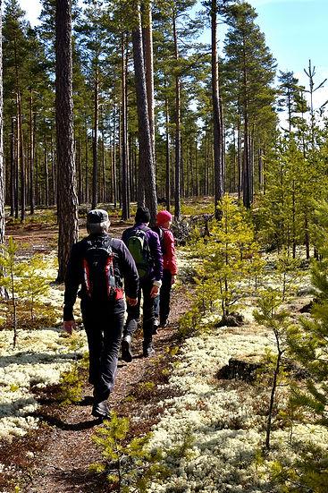 Naturvandring i skogen