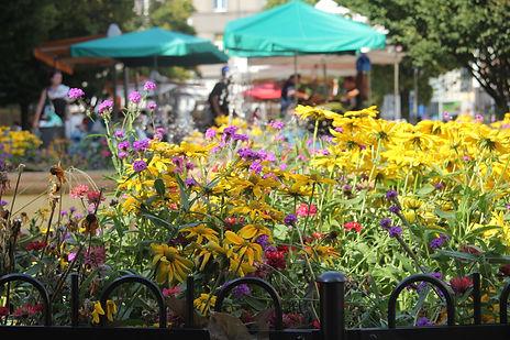 Blommor i Tjeckien