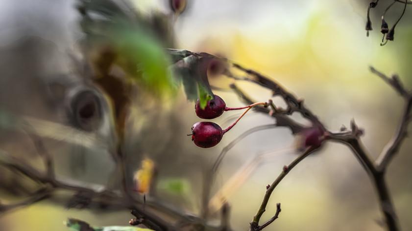 Autumn feelings with Macro Lens