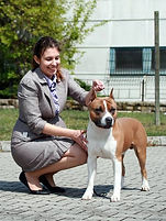 my favourite amstaff picture about bred by male casino royale from serendipitystaff, he is a type american staffordshire terrier his owner Kinga Kocsis born at serendipity amstaffs kennel, Hungary casino royale from serendipitystaff, amstaff, serendipity amstaff, serendipitystaff, serendipity staff, kennel, breeder, american staffordshire terrier, american staffordshire terrier, amerikai staffordshire terrier, bull type terrier, showdog, samune domotor reka