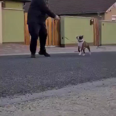 Puppiee first training
