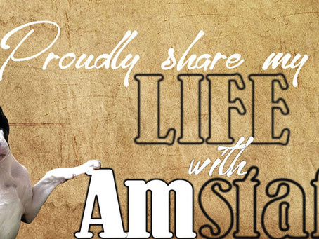 10 facts why you share your life with an Amstaff