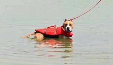 Miért jó az úszás a kutyádnak?
