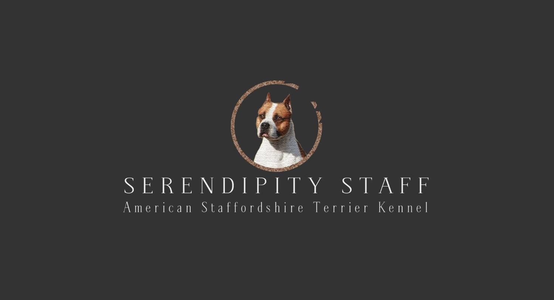 Serendipitystaff Kennel | Hungary | Serendipityamstaffs |