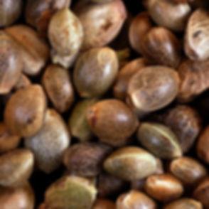 Seeds Photo.jpg