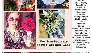 Flower Essence Line