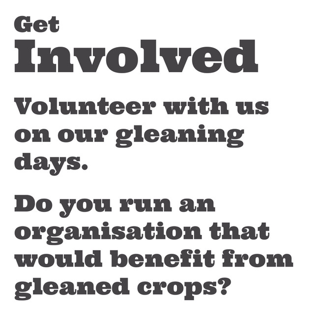 Click here to sign up to volunteer for gleaning.  If you are an organisation that needs free food then please email gleaning@wearemud.org for more information.